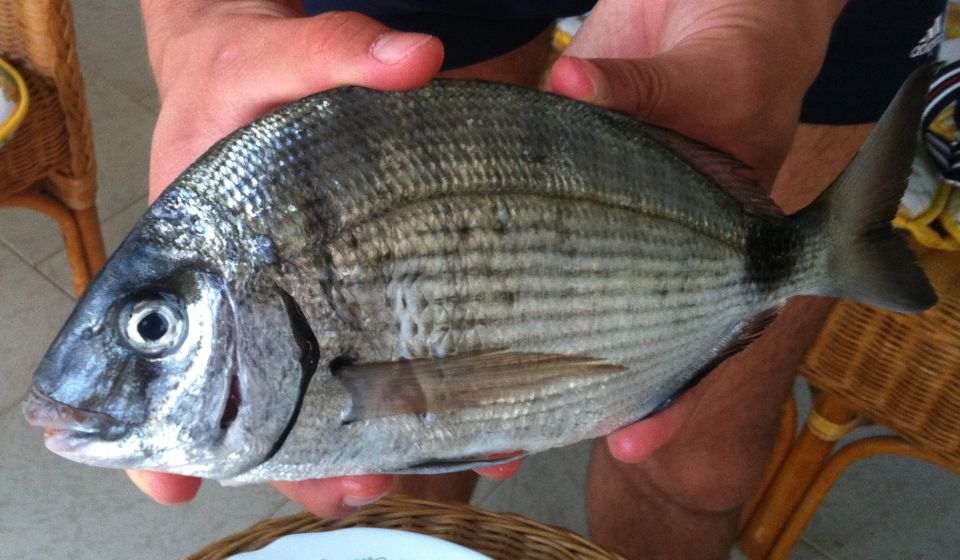 fish 04