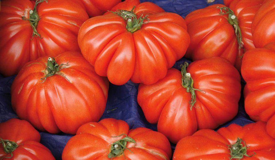tomatoes 04