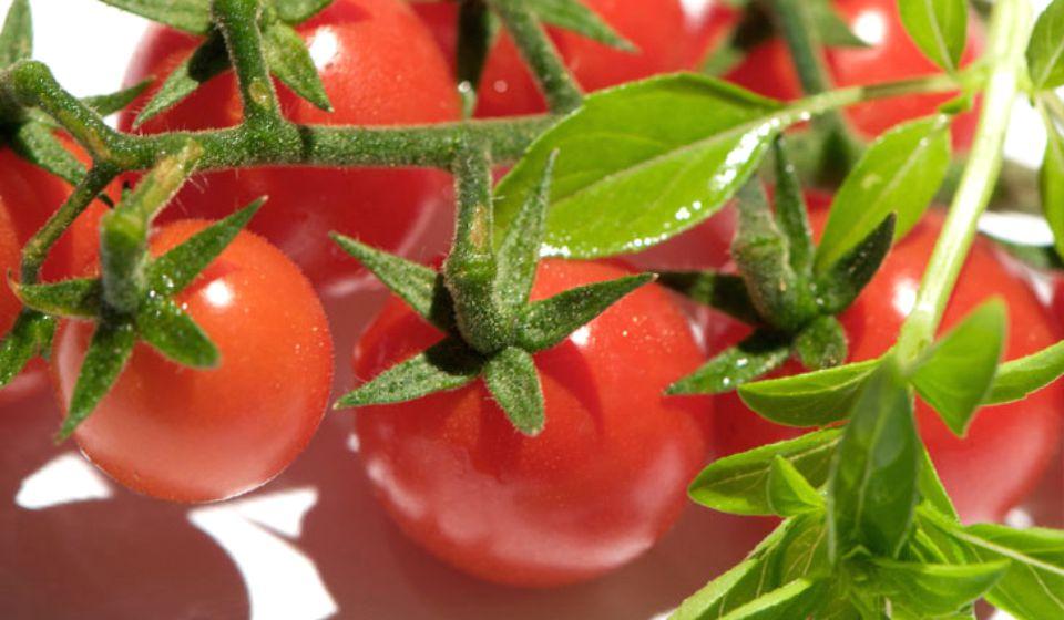 tomatoes 05