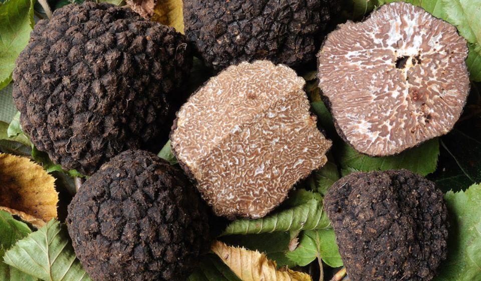 truffles 02